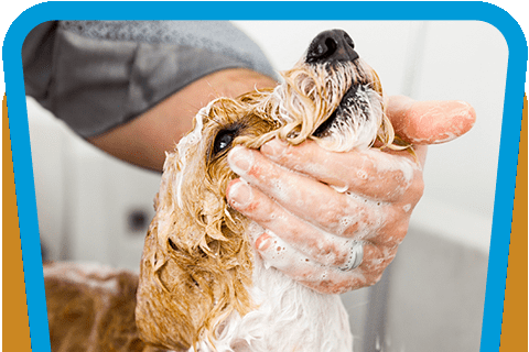 Save Money, Time, and Your Back with Clean Getaway's Self-service Dog Wash